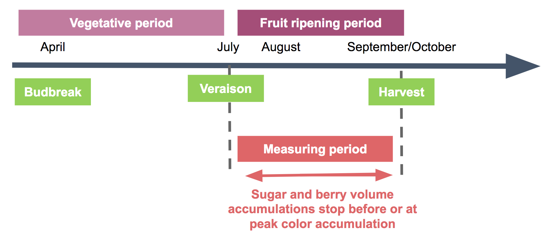sugar loading curve